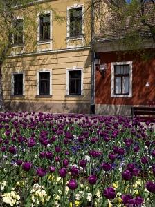 Spring in Vac