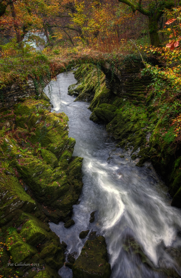 The Mossy Bridge