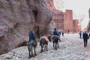 Donkey rides Petra Jordan