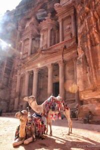 Camels at the Treasury in Petra Jordan