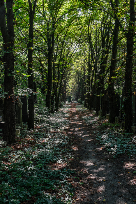 Path thru Jewish Cemetery Budapest