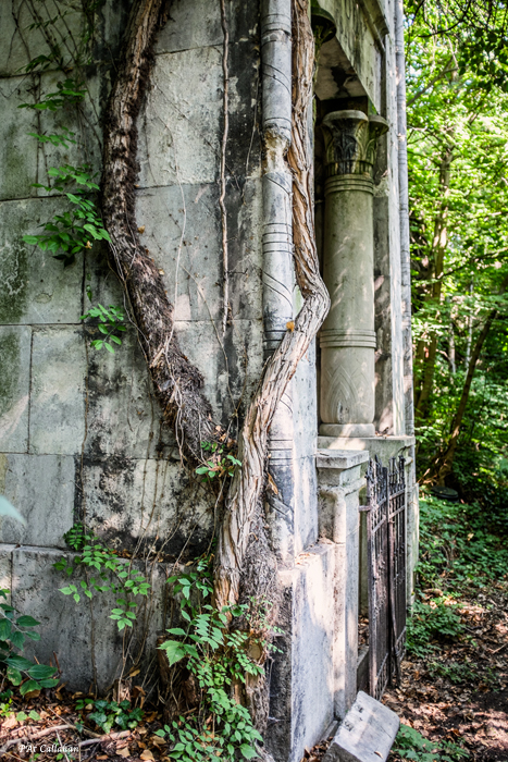 trees in the Jewish Cemetery Budapest wrap around the mausoleums