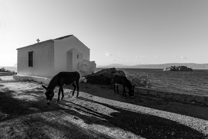donkeys around church on hydra island greece