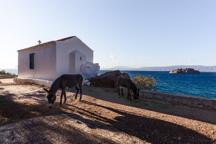 two donkeys near a church on Hydra Island