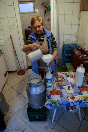 grandmother bottling fresh milk in Kolmarom Hungary