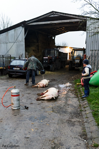 Komárom Pig Killing Preparing