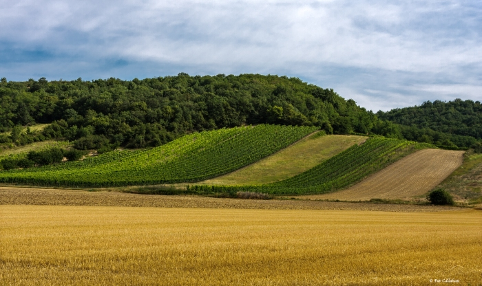 hills and vineyards of eastern Austria