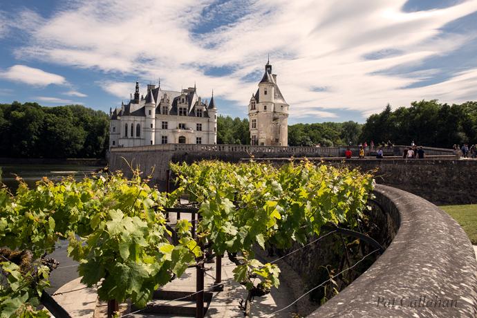Chateau de Chenonceau vineyards