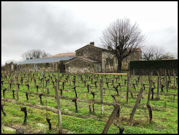 Saint Emilion Vineyard